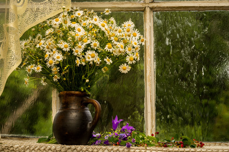 window sill: chamomiles on the window sill in a sunny rainy day