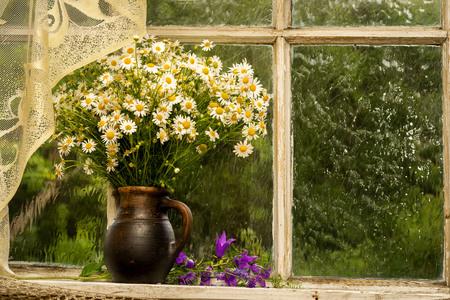 daisie: chamomiles sul davanzale della finestra in una soleggiata giornata di pioggia