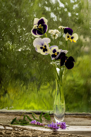 window sill: Heartsease (Viola tricolor) fine flowers bouquet in a window sill in a sunny rainy day