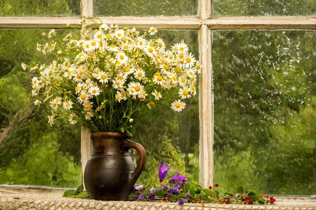 window sill: still life bouquet of chamomiles on a window sill in a sunny rainy day Stock Photo