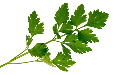parsley isolated on white Banque d'images