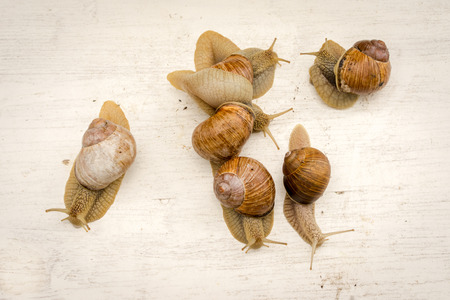 gastropod: six gastropod snails