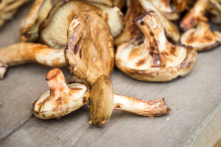 fungous: coral milky cap mushrooms close up on a wooden table Stock Photo