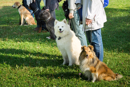 A group of dogs sitting near their trainers in a dog school Stockfoto
