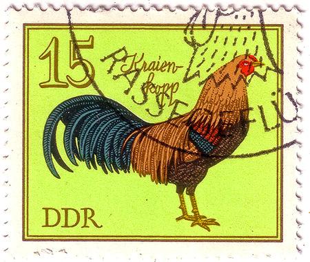 gdr: GDR - CIRCA 1979: A stamp printed in GDR (Eastern Germany) shows Kraien-kopp cock, series Birds - German Cocks, circa 1979 Stock Photo