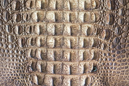 skin art: Crocodile skin texture Stock Photo