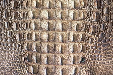 Krokodil bőr szerkezetét