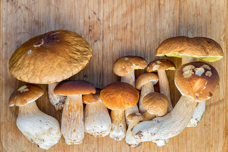 cepe: group of fresh cepe mushrooms on a wooden table with copy space, harvest from the forest Stock Photo