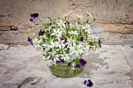 ornithogalum: Ornithogalum and pansies bouquet near the concrete wall Stock Photo
