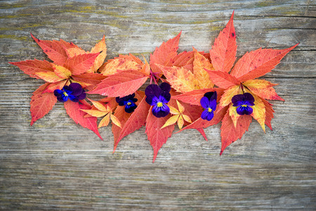 Autumn composition. Various colorful grape leaves and pansies. Stock Photo