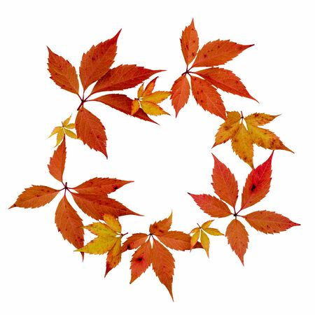 Thanksgiving wreath from red and yellow grapes leaves isolated over white