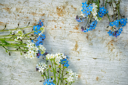 bunches: three bunches of white and light blue forget me not flowers on as a frame on an old wooden painted table with copy space