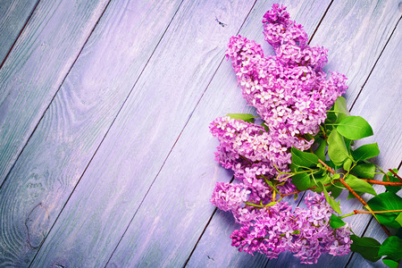 A bunch of lilacs at the corner of the wooden plank table with copy space