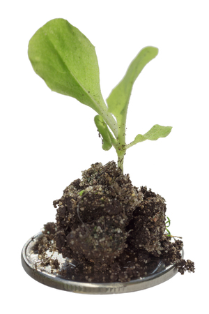 Plant grows in a coin, isolated on white background Stock Photo