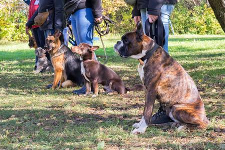 Groep honden met eigenaars bij gehoorzaamheidsklasse Stockfoto
