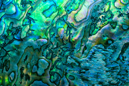New Zealand paua shell (Haliotis Iris) close up as a luxury background