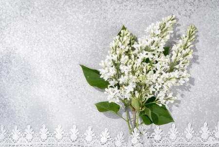 branch of white lilac with lace border on a silver cement background, top view with copy space