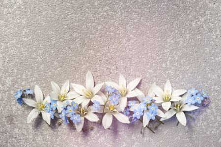 White flowers ornithogalum and blue forget me not in a row on a silver cement background as a frame with copy space for your holiday congratulations text on a greeting card