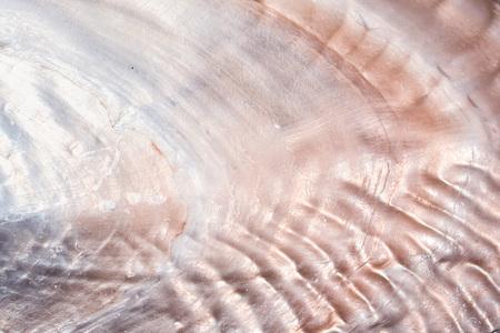 Luxus Perlmutt Muschel Hintergrund Textur Nahaufnahme