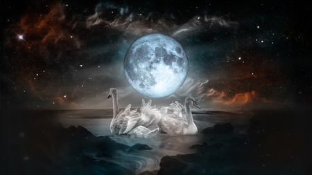 Couple of white swans dancing in the landscape of night sea with fool moon and galaxy stars background. Reklamní fotografie
