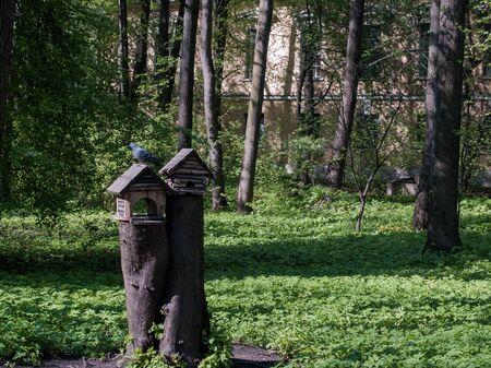 feeders: Feeders for birds in the park in the forest and the trees Stock Photo