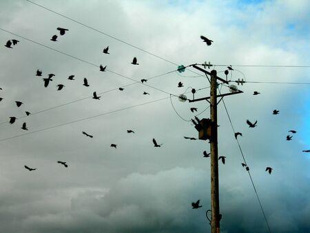 pole with birds