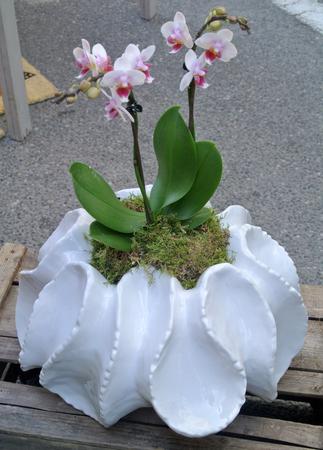 flower pot Banque d'images