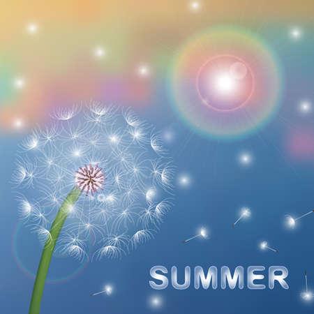 summer dandelion in the sun vector