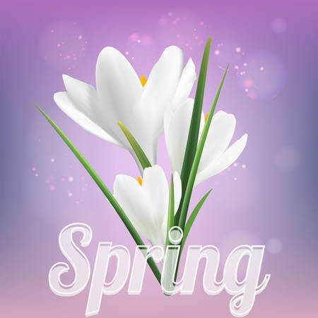 the first flowers are white crocuses on a lilac background spring Ilustracje wektorowe