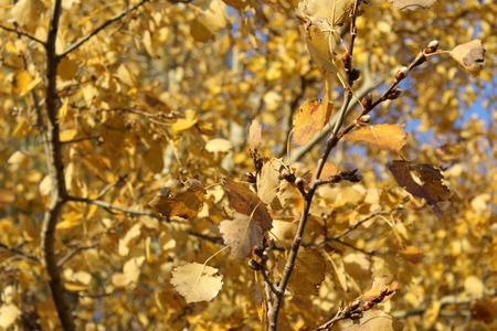 tree leaves with yellow leaves
