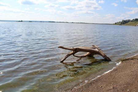 snag on the river bank