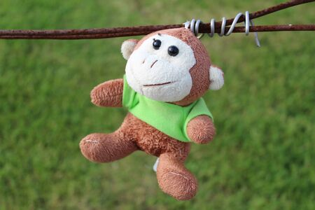 the toy monkey is left hanging on the barbed wire on a green grass background