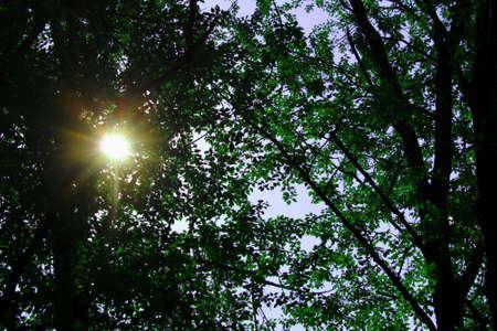 sun rays break through the trees 版權商用圖片