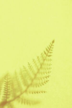 Yellow background with shadow of the frond. Copy space. Place for text and design.  写真素材
