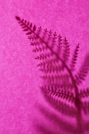 Background with shadow of the frond. Copy space. Place for text and design. 写真素材