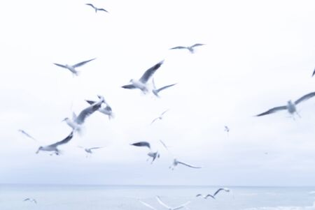 Flying seagulls and the sea. Cloudy sky. Banco de Imagens