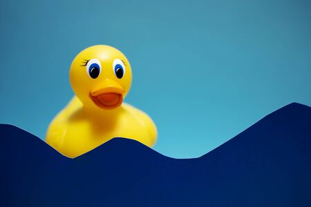 Yellow duck on the blue background Stock fotó