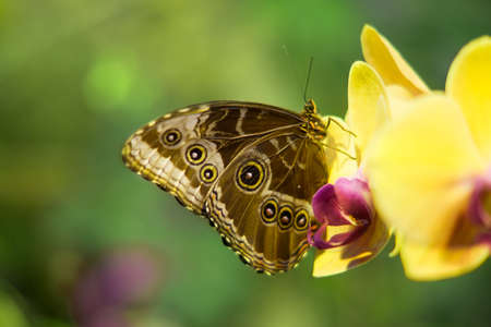 Butterfly on a Beautiful flower of yellow orchid (Orchidaceae) photo