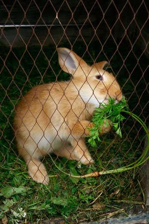 rabbit cage: Coniglio che mangia erba in una gabbia