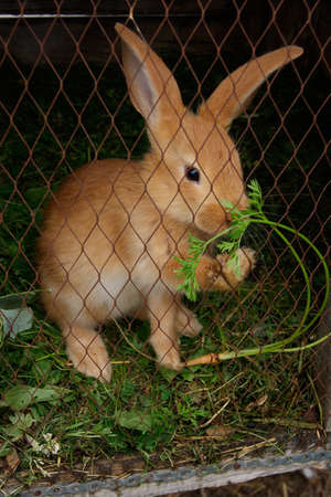 rabbit cage: Rabbit eating grass in a cage Stock Photo