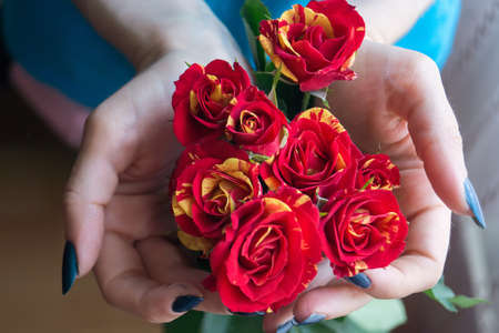 arm bouquet: Bouquet red and yellow roses in female hands