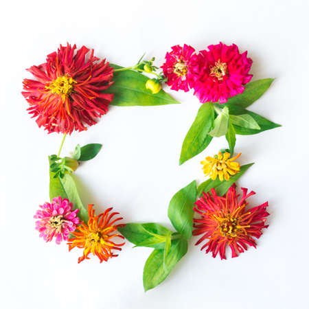 A square frame of zinnia flowers of different colors on a white background