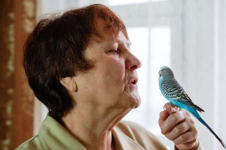 Budgerigar (Melopsittacus undulatus) parrot sits on hands of a woman listening to her.