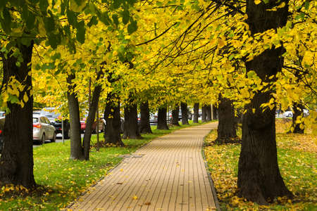 Autumn trees and a footpath along the road. Stock Photo
