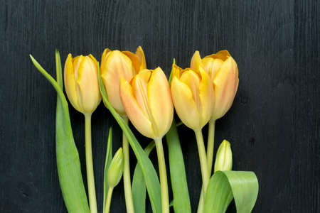 Five beautiful yellow tulips on wooden black background