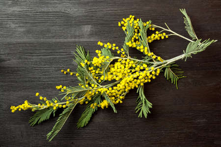 Mimosa branch on a black wooden table