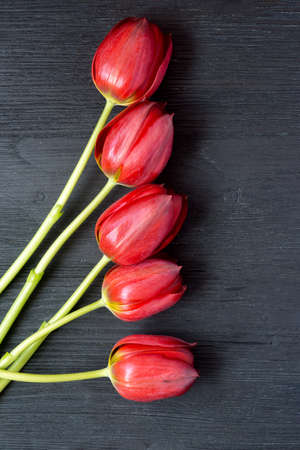 Five beautiful red tulips on wooden black background