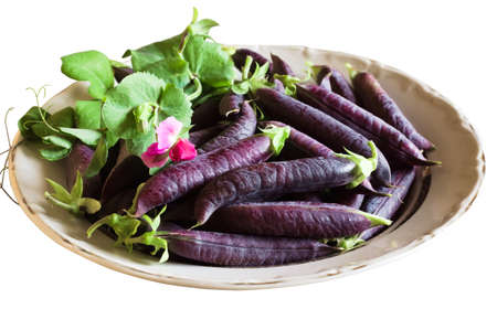 Harvest of purple pea pods in a plate isolated on white background