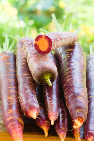 Freshly picked crop of dark purple carrots with orange center on a wooden window sill on a farm, harvest season