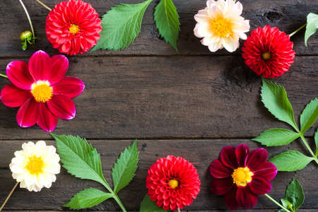 Frame of colorful dahlia flowers on a wooden background. Beautiful floral background